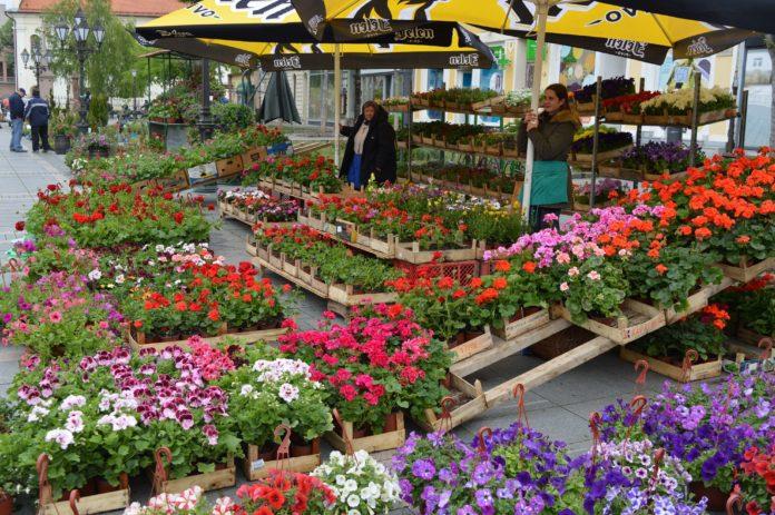 Festival cveća Sombor