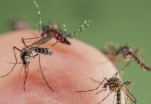 Prskanje komaraca Sombor
