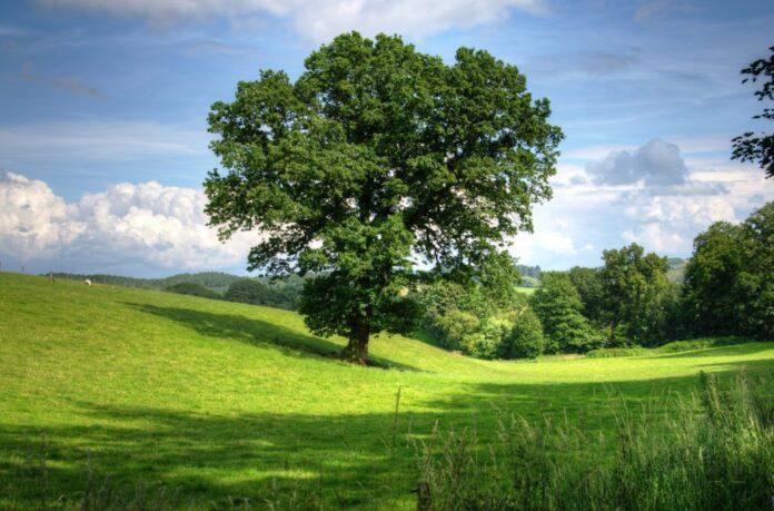 drvo_posadi