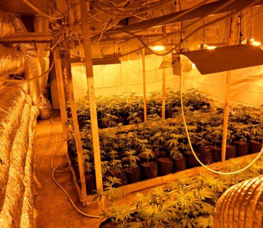 laboratorija-marihuana