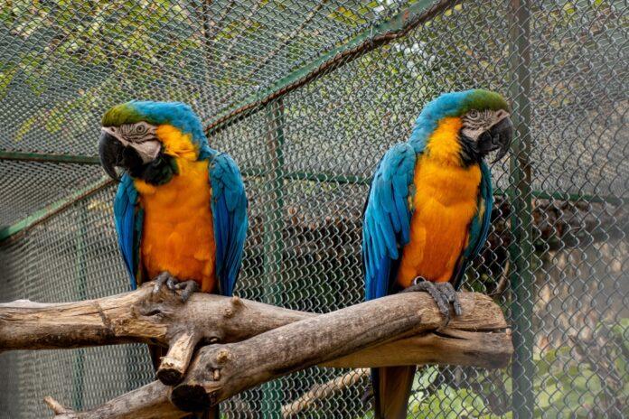 papagaji_zoo_kolut