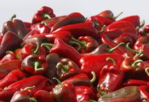 povrce-paprika-paprike