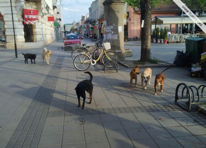 psi_lutalice_sombor